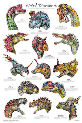 (LAMINATED) Weird Dinosaurs POSTER (61x91cm) Educational Wall Chart Picture Art