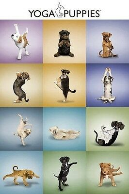(LAMINATED) YOGA PUPPIES POSTER (61x91cm) DOG LOVERS HUMOUR PICTURE PRINT NEW
