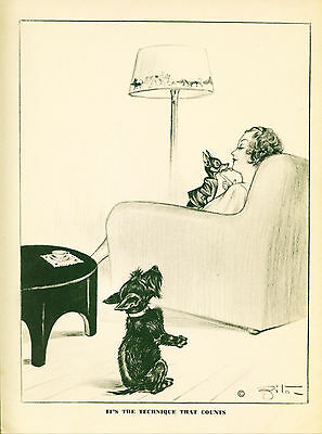 Dog Print 1941 Scottish Terrier sits up looks at Chihuahua or Manchester Terrier