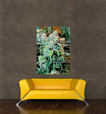 Poster Print Photo Nature Plant Cannabis Sativa Marijuana Weed Grass Buds Seb441