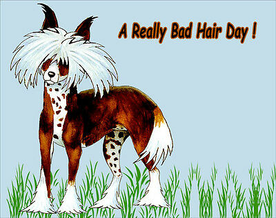 Cartoon Chinese Crested Dog Fridge Magnet, A Really Bad Hair Day.