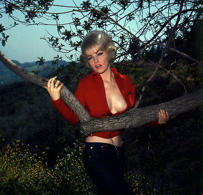 WH162 VINTAGE '70 PINUP TRANSPARENCY VOGEL PHOTO Pretty Model Poses By A Tree
