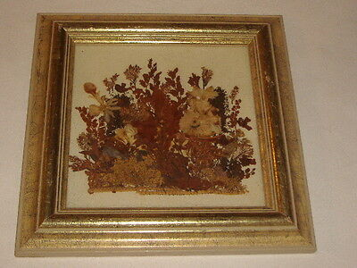 """FRAMED DRIED, PRESSED FLOWERS - Gold Marble Look Frame - 9.5"""" x 9.5"""""""
