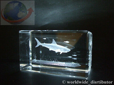 Laser Crystal Paperweight Sea World Shark And Fish 3638 Presentation Boxed