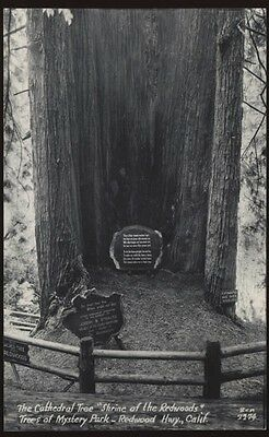 RPPC Cathedral Tree TREES of Mystery REDWOOD Hwy SEQUOIAS California CA POSTCARD
