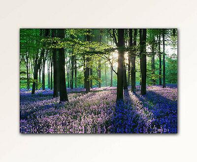 120x80cm leinwand bilder xxl wandbild lavendel wald natur b ume leinwandbild eur 29 00. Black Bedroom Furniture Sets. Home Design Ideas
