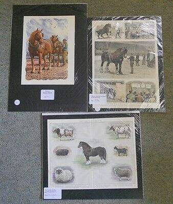 Collection of 3 Victorian & Antique Colour Prints Relating to Horses. by Anon
