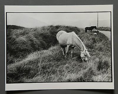 David Hamilton Original Silver Gelatin Photo 16x13 Ilford Ilfomar Chevaux Irland
