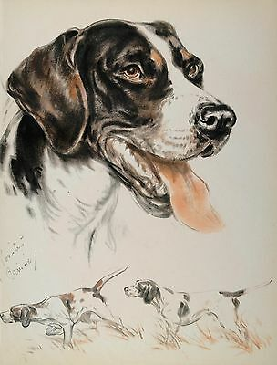 POINTER HUNTING DOG STUDY Vintage Dog LARGE Print 1944 Diana Thorne