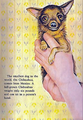 VINTAGE CHIHUAHUA SMALL DOG CHILDRENS Cute Print ILLUSTRATION  1980's