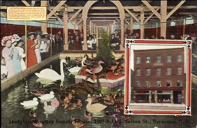 Syracuse NY Hodgkins Poultry Supply Duck Pond c1910 Postcard