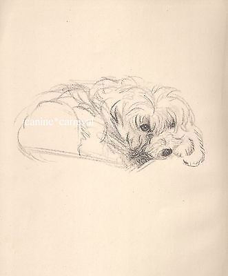 SWEET  VINTAGE CAIRN TERRIER Art Print  1946 by Lucy Dawson