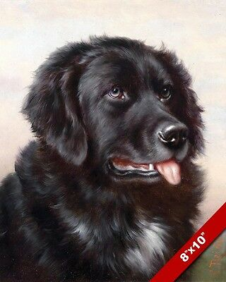 Newfoundland Dogs Portrait Canine Painting Pet Newfie DogArt Real Canvas Print