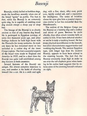 BASENJI BARKLESS 1950  Dog Breed ART AND BREED Description  PAUL BROWN