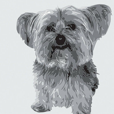 YORKSHIRE TERRIER YORKIE DOG FINE ART PRINT - by Emily Burrowes