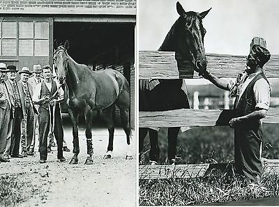 20 Phar Lap 4X6 Photo Prints Set Horse Racing Tommy Woodcock New Not Signed