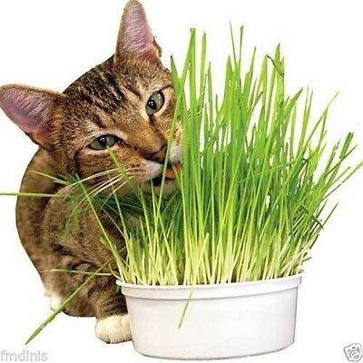 Natural Organic Cat Rabbit Weat Grass Wheatgrass 500g.