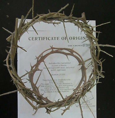 Authentic Jesus Biblical Crown of Thorns From the Holy Land