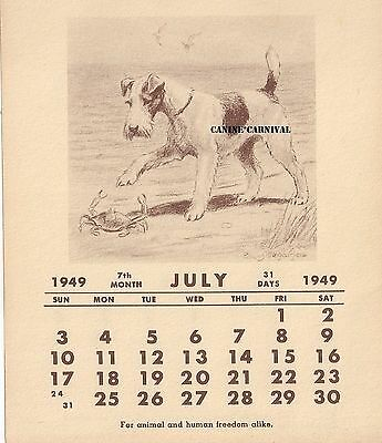 Edwin Megargee Fox Terrier Wired Dog 1949 July Calendar Art Print