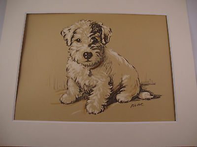 1936 LUCY DAWSON Vintage Colour Print SEALYHAM TERRIER PUP Matted Ready to Frame