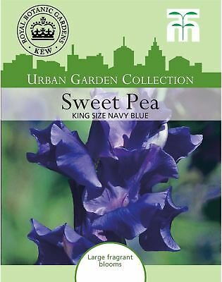 Thompson & Morgan - Urban Garden Sweet Pea King Size Navy Blue - 20 Seed
