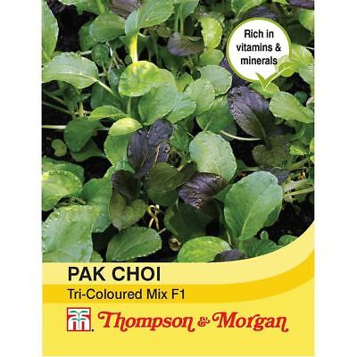 Thompson & Morgan - Pak Choi (Chinese Cabbage) Tricoloured Mix F1 125 Seed
