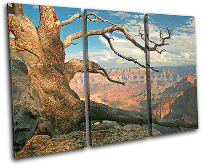 Grand Canyon Tree  Landscapes TREBLE CANVAS WALL ART Picture Print VA