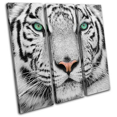 Siberian Tiger Eye Animals TREBLE CANVAS WALL ART Picture Print VA