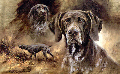 GERMAN SHORTHAIRED POINTER GSP DOG LIMITED EDITION PRINT - the late Mick Cawston