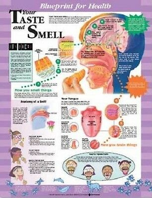 Blueprint For Health Taste And Smell Chart POSTER (66x51cm) Anatomical New
