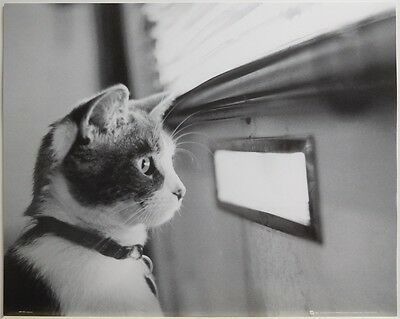 KITTEN WINDOW POSTER (50x40cm) CONCENTRATION NEW LICENSED ART