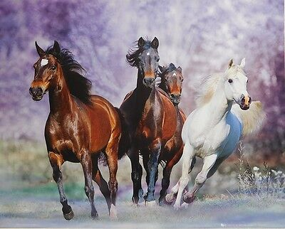 (LAMINATED) Wild Horses POSTER (40x50cm) New Licensed Art