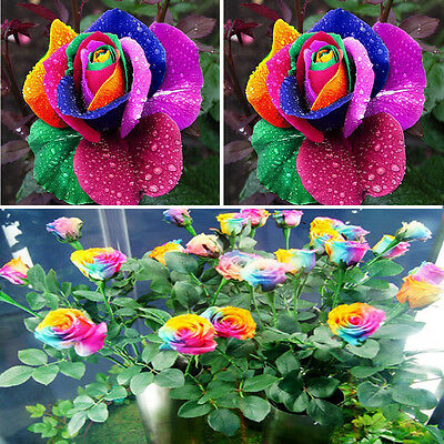Hot Beautiful 200Pcs Colorful Rainbow Rose Flower Seeds Yard Garden Plant Decor