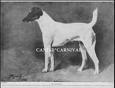 """Ch """"the Sylph"""" Best Of Early Smooth Fox Terrier 1934 Vintage Dog Art Print"""