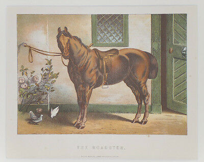 1895 Antique HORSE Chromolithograph Print THE ROADSTER - Mounted