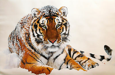 SIBERIAN TIGER POSTER (61x91cm) IN THE SNOW NEW LICENSED ART