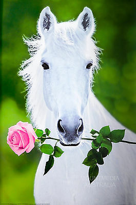 WHITE HORSE - PINK ROSE POSTER (91x61cm)  NEW LICENSED ART