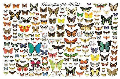 BUTTERFLIES OF THE WORLD POSTER (61x91cm) EDUCATIONAL WALL CHART NEW LICENSED