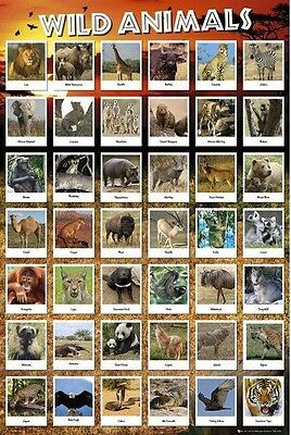 (Laminated) Wild Animals - Educational Chart Poster (61X91Cm) New Wall Art