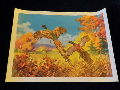 Vintage Rooster Pheasant Pair Flushed Flying Bird Print T