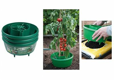 Garden Plant Halos Watering Tomatoes Beans Cane Support Pack Of 3 Green
