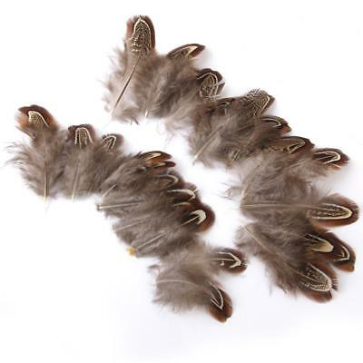 50 Pheasant Flank Feathers 5-9cm for Craft Fly Tying Millinery Dreamcatcher