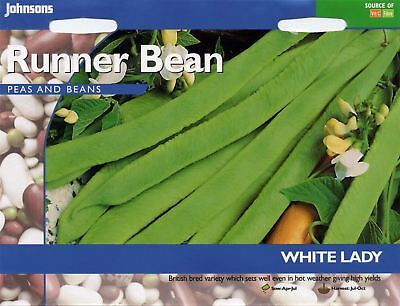 Johnsons Seeds - Pictorial Pack - Vegetable - Runner Bean White Lady - 50 Seeds