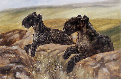 "KERRY BLUE TERRIER DOG FINE ART LIMITED EDITION PRINT - ""Rocky Outcrop"""