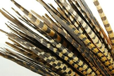 "100 Pcs ENGLISH RINGNECK PHEASANT Natural Feathers 18-20"" Halloween/Hats/Costume"