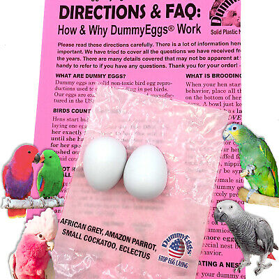DUMMY EGGS STOP LAYING! African Grey Eclectus Amazon Parrots Solid Plastic  Fake