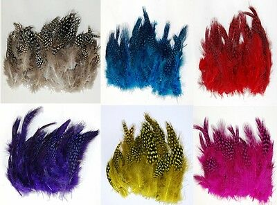 """GUINEA PLUMAGE - MANY COLORS TO CHOOSE 1""""-5"""" Feathers Halloween/Bridal/Craft/Art"""