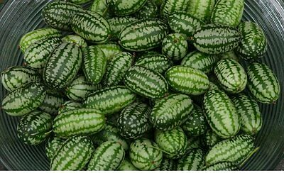 Vegetable - Cucamelon - 200 Seeds - Large