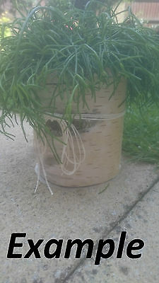 Ash Pot Wooden Planter Garden Wood Pot Indoor Plant Pot