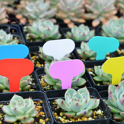 100pcs Plastic Plant T-type Tags Markers Nursery Garden Plant Labels Tag Mark